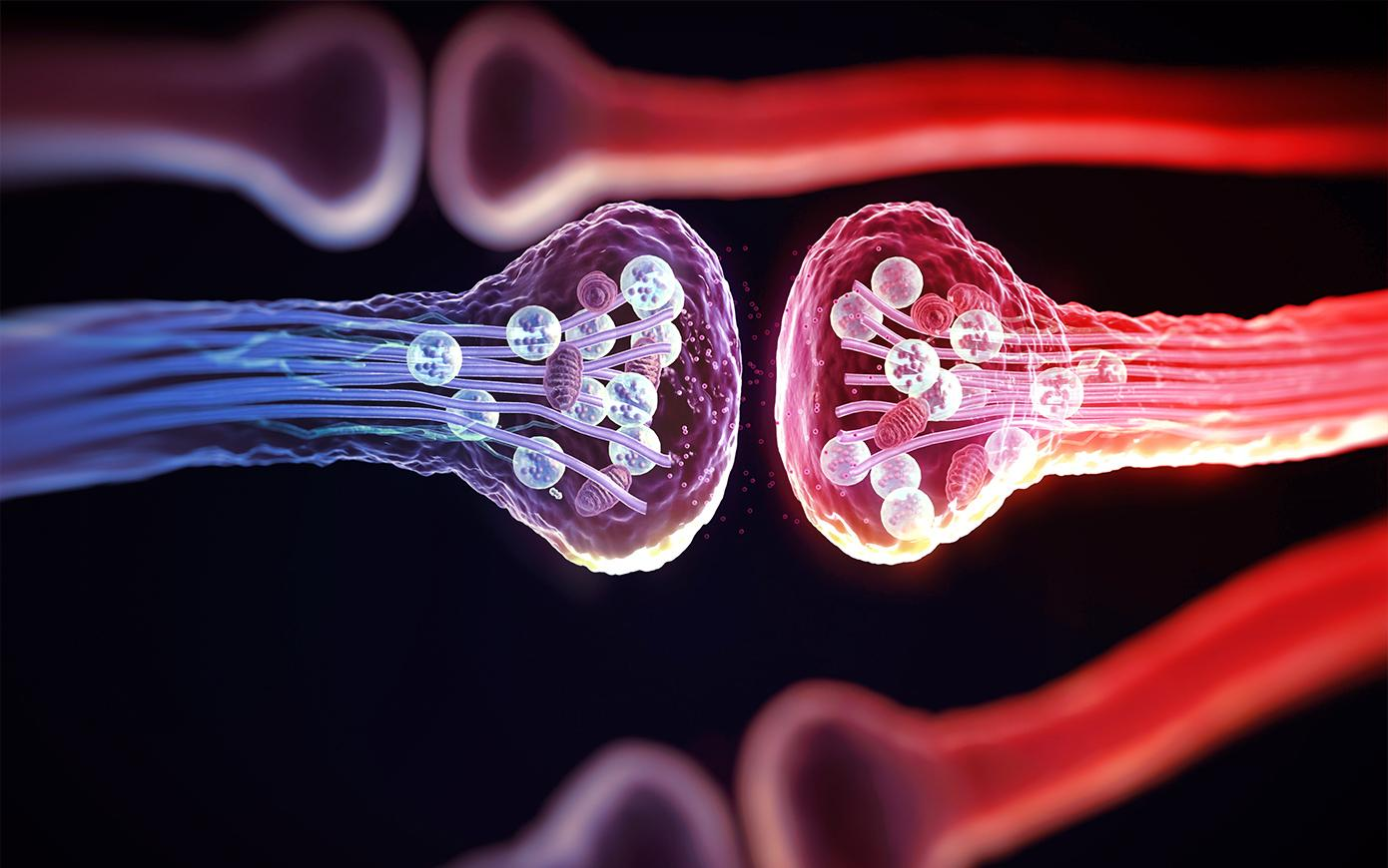 Сигнальные системы нервной системы