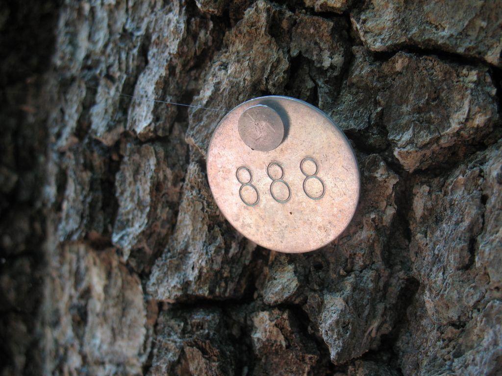 нумерология 888