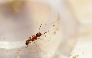 К чему появляются муравьи в доме – народные приметы