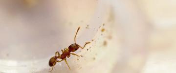 К чему появляются муравьи в доме — народные приметы
