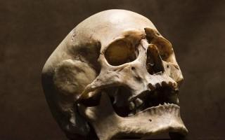 К чему снится череп – толкование сна