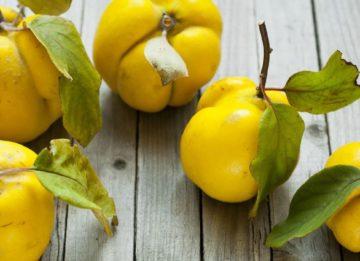 Айва во сне: что предвещают грезы с «золотым» яблоком